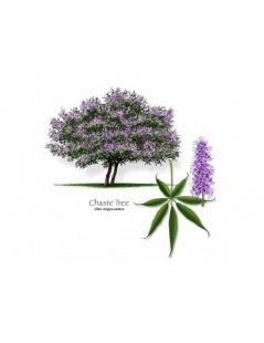 Vitex tea - Agnus castus