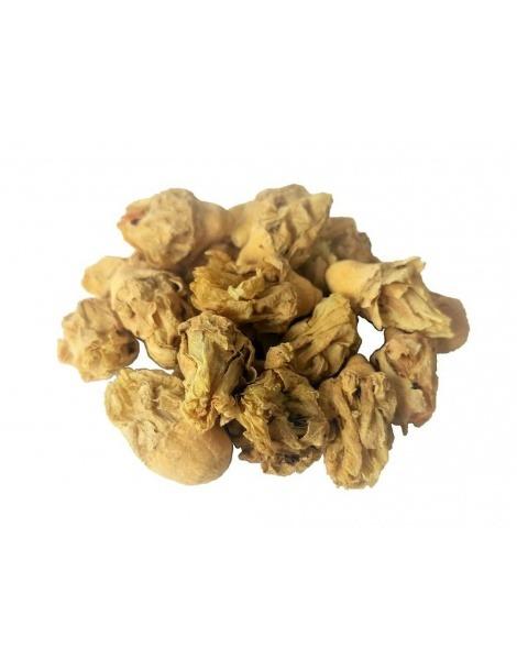 印度图Cuctus花(仙人掌榕籼)