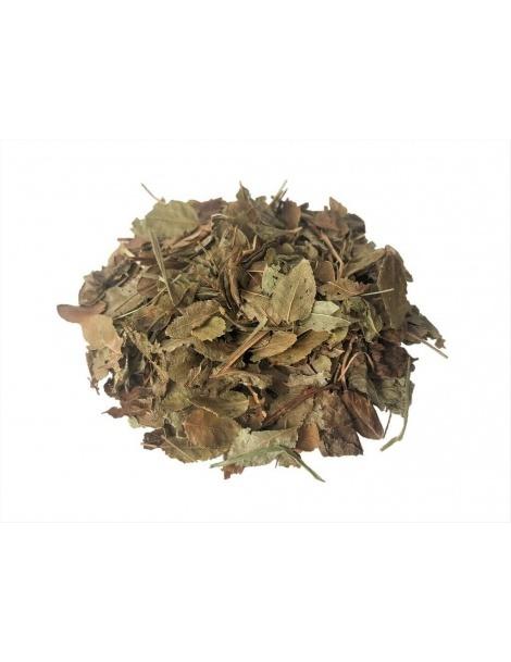 Folhas de Mirtilo ou Arandos (Vaccinium Myrtillus)