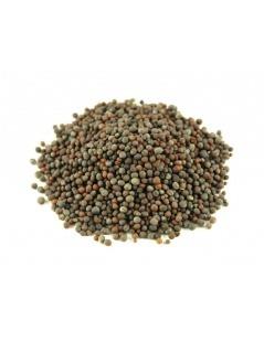 Mostarda Preta (Brassica nigra)