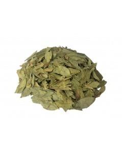 Un tè di Senna (Cassia angustifolia)