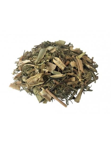 Chá de Funcho em planta (Foeniculum vulgare)