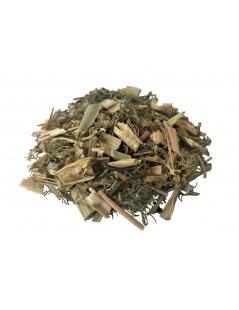 Chá de Funcho planta - Foeniculum vulgare