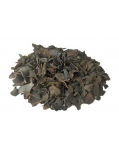 Les Algues Marines (Fucus Vesiculosus L.)