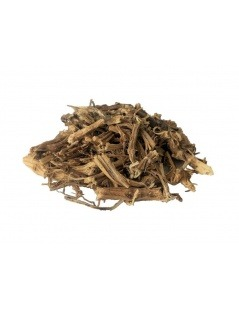 Tea of the Root of stinging Nettle (Urtica dioica)