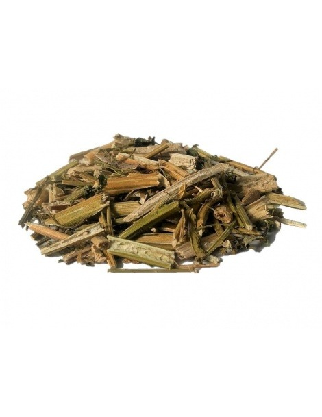 Wormseed (Chenopodium ambrosioides L.)