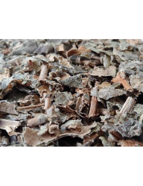 Canela de Velho (Miconia albicans)
