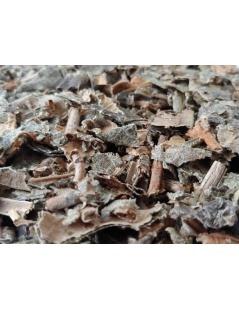 Tea Cinnamon Old - Miconia albicans