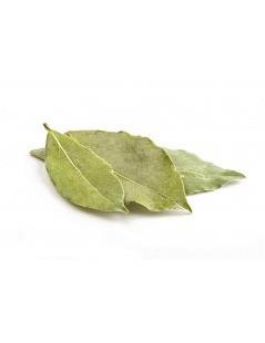 Té de Laurel (Laurus nobilis)