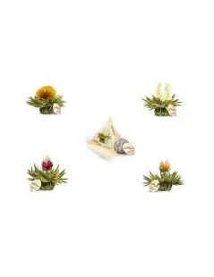 Pack 4 Flores de Chá Tealini
