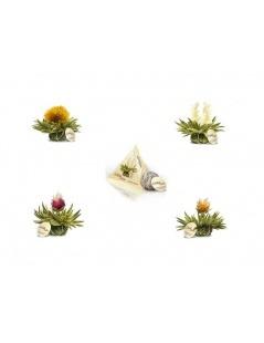 Pack De 4 Fleurs De Thé Tealini