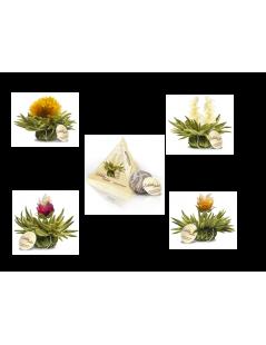 Cuadro Tealini con 8 Flores + Taza