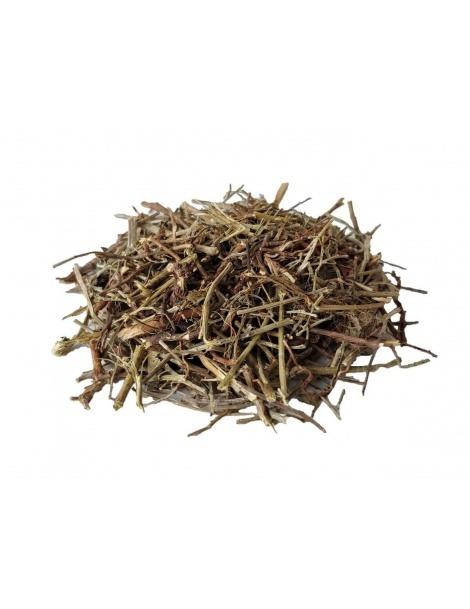茶歇石(叶下珠 (Phyllanthus niruri)