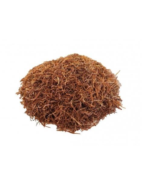 Chá de Barbas de Milho (Zea Mays)