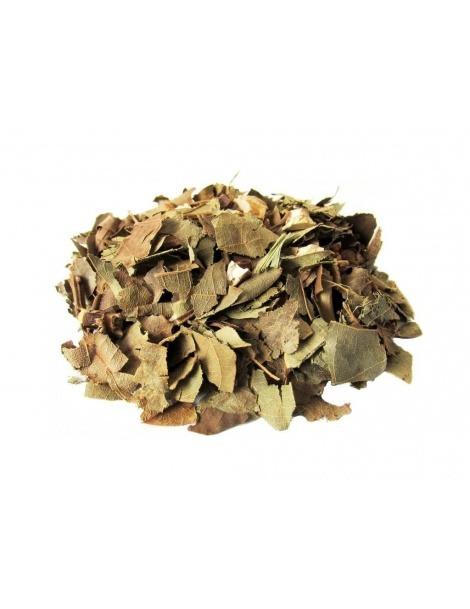 Abacateiro, Folhas (Persea Americana)