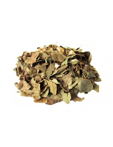 Tè di Avocado (Persea Americana)