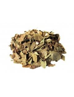 Avocadoblätter-Tee - Persea Americana