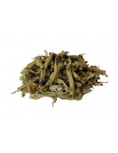 马鞭草叶(阿洛citrodora)