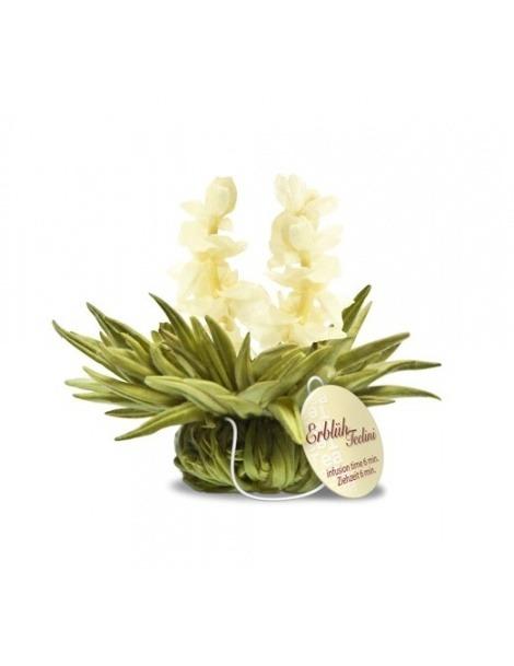 Flor de Chá - Tealini Pérola de Jasmim