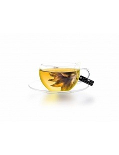 Exquisitea - Chá Amarelo - Creano