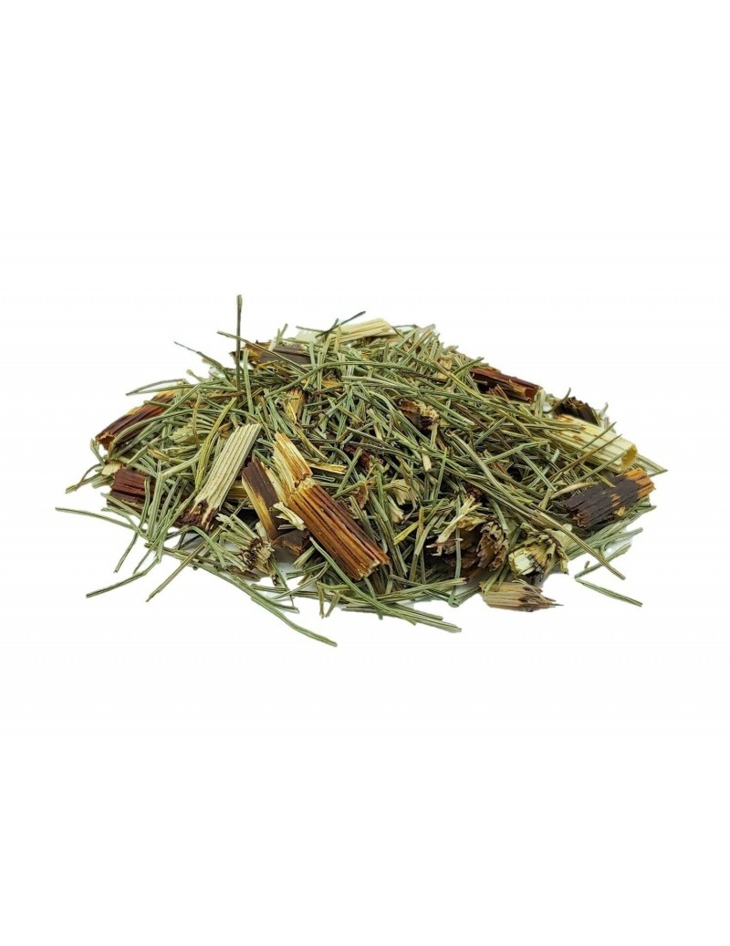 马尾茶(Esquisetum)