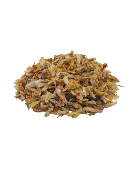 Tee Blässhuhn in Blüte (Pterospartum tridentatum)