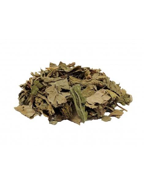 Plantain, feuilles (Plantago major)