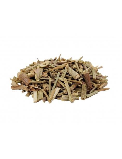 Thé de Chicorée, plante (Cichorium intybus)