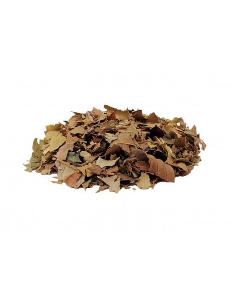 Tè di Guava (Psidium guajava Linné)