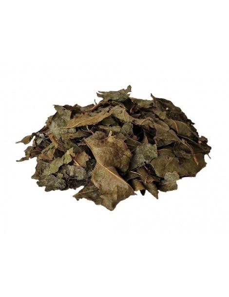Tee Bugre (Cordia Salicifolia)