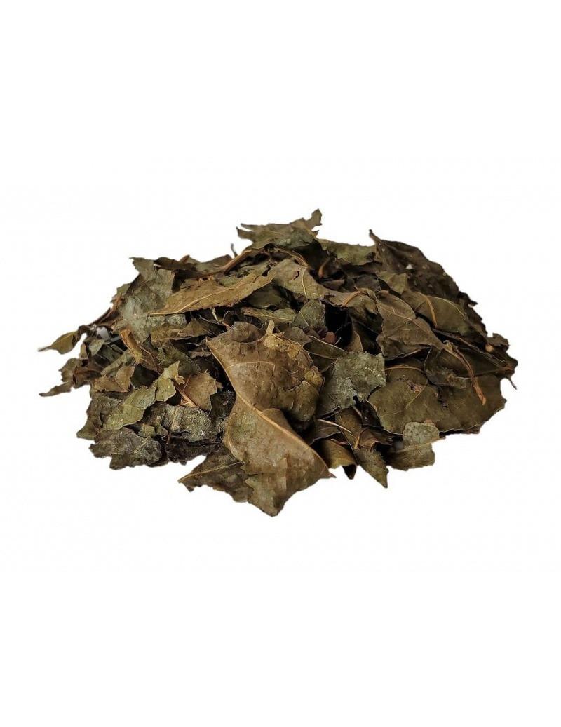 Thé de Bugre (Cordia Salicifolia)
