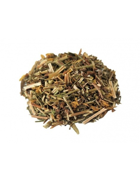 Hipericão, Planta (Hypericum perforatum)