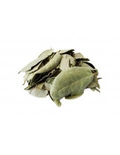 Bitter Melon (Momordica charantia) - 30 Caspules