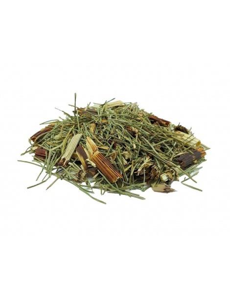 Chá de Cavalinha em Planta (Equisetum Arvense) - Ossos, Emagrecer, Próstata
