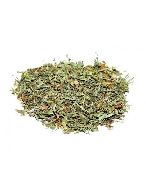 Té de Ajenjos (Artemisia absinthium L.).