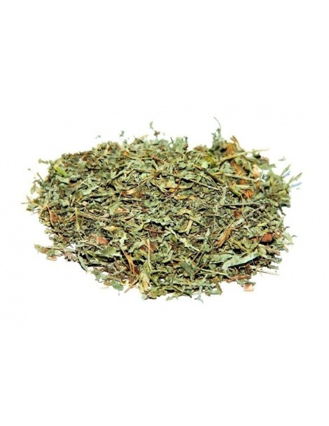 Tè Losna Assenzio (Artemisia absinthium L.).