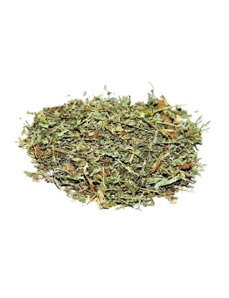 Té de Ajenjos - Artemisia absinthium L.