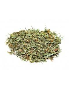 Chá de Losna Absinto - Artemisia absinthium L.