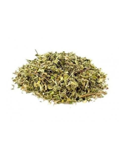 茶的Damiana(Turnera diffusa)