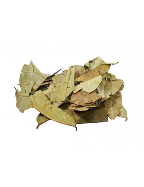 Chá de Graviola (Annona muricata)