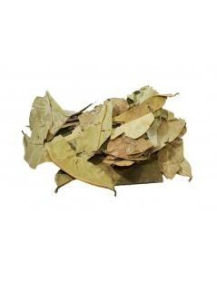 Chá de Graviola - Annona muricata - chá de annona