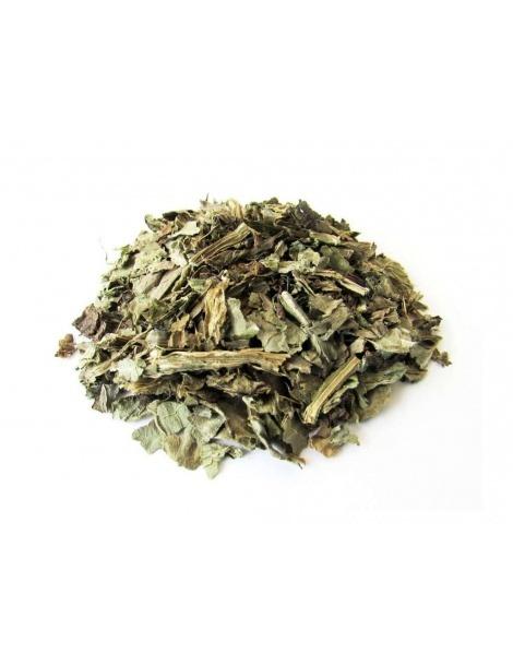 Chá de Cardo Mariano (Silybum Marianum)