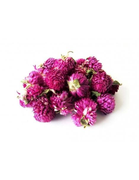 Perpétua Roxa, Flores (Gomphrena Globosa)