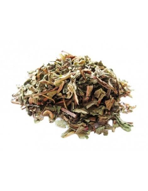 Dandelion Tea plant (Taraxacum officinale L.)