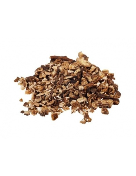 Diente de León en raíz (Taraxacum officinale L.)