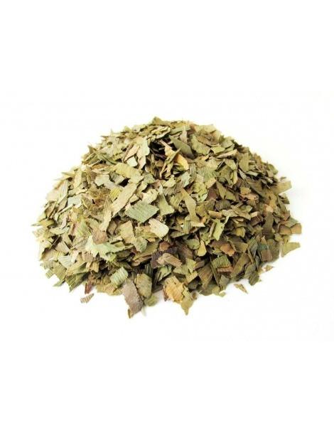 Chá de Ginkgo Biloba