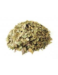 Tè Ginkgo Biloba