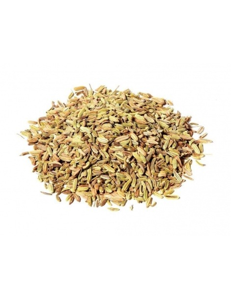 Graines de Fenouil (Foeniculum vulgare)