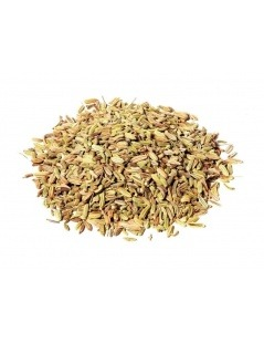 Un thé de Fenouil - Graines de Fenouil - Foeniculum vulgare