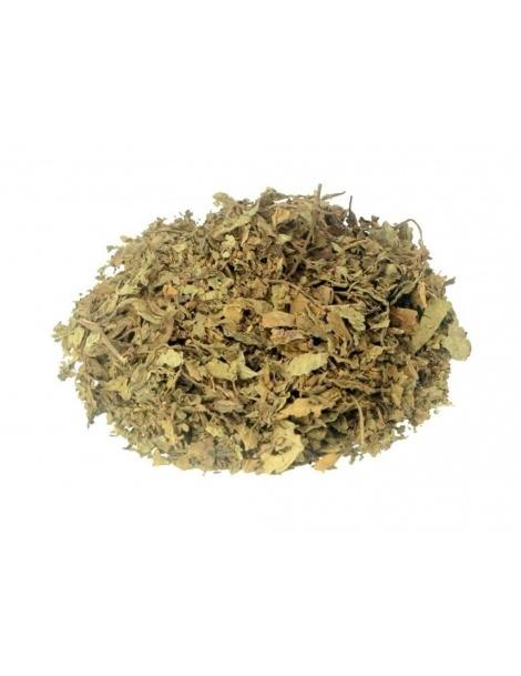 Chá de Java, Folhas (Orthosiphon aristatus)